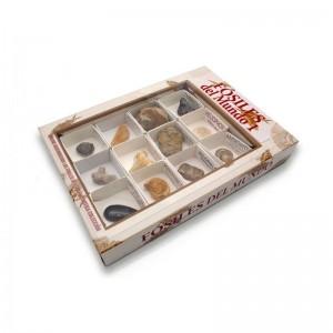 Colleccion de fósiles