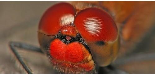 Microscopio para Entomología